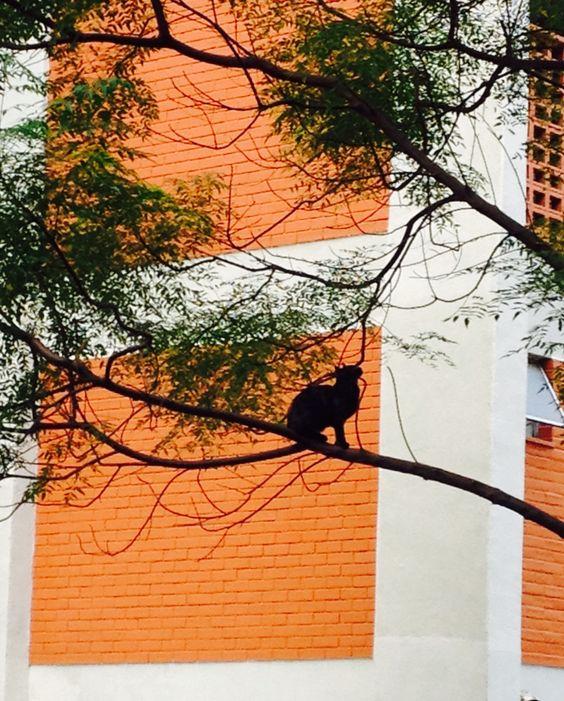 O clássico do gato preto em perfil. A arte sempre imita a vida!  Este nas alturas para caçar passarinhos.