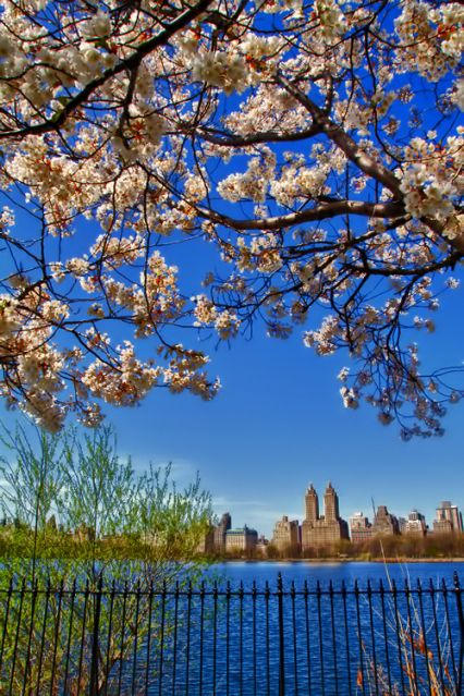 Blue skies & beautiful blossoms at the Central Park reservoir.