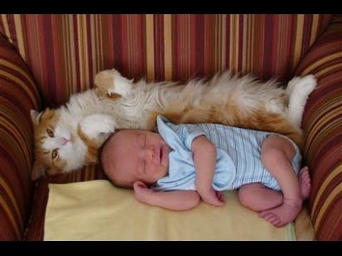 Cats Meeting Babies for First Time Compilation 2014 [NEW HD] - YouTube