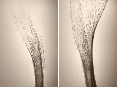 Qi5 botanical print by Joanna Stoga