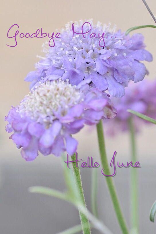 Everyday Lil' Secrets Of Joy ~Goodbye May Hello June