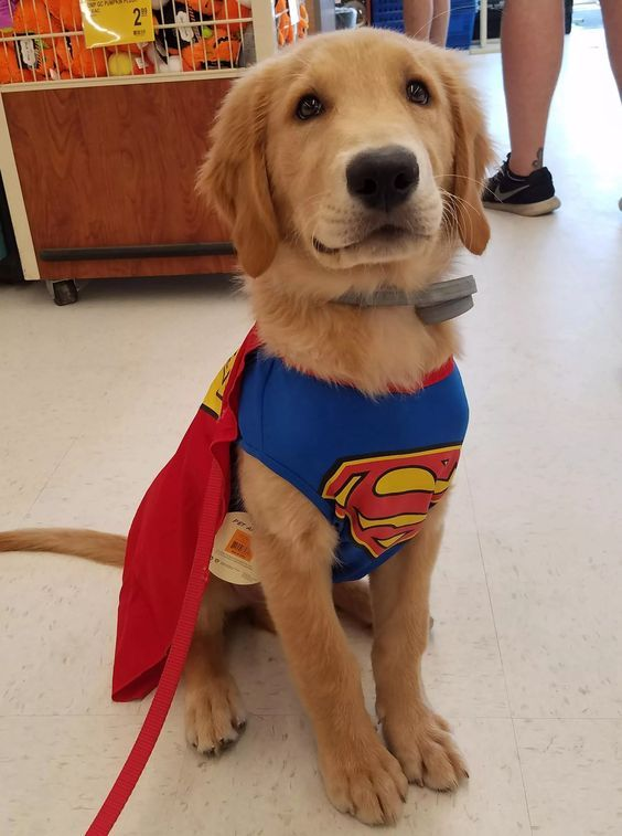 30 Halloween Costumes For Your Pups Puppy Halloween Costumes