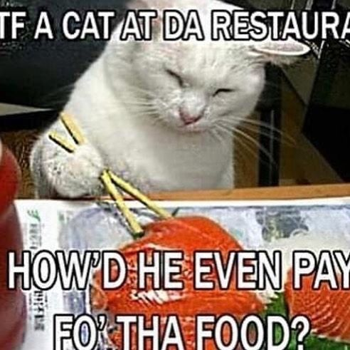 Pin On Funnycats