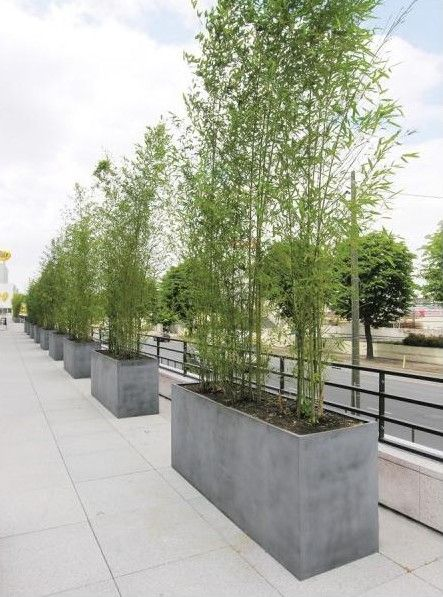 Dig the urban Bamboo screen planters.