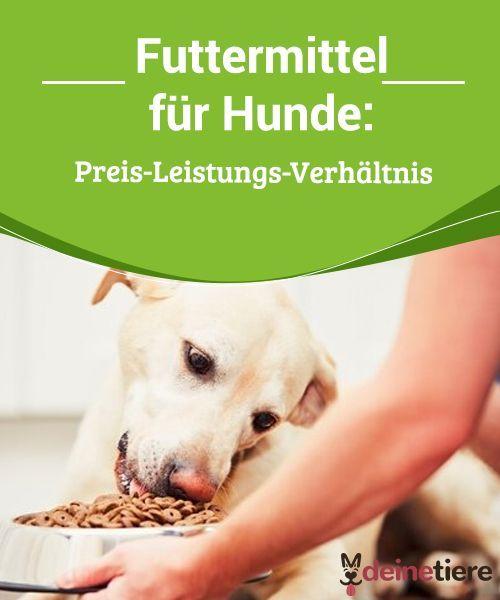 Futtermittel Fur Hunde Preis Leistungs Verhaltnis Hunde Hunde