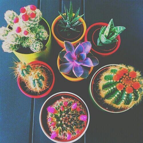 cacti, cactus, colorful, photography, summer, tropical, tumblr, pastelangel101, bright pastel