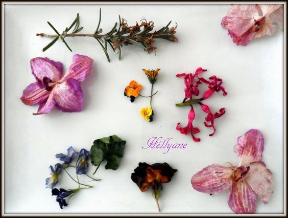 Fleurs naturelles en décoration dans mes recettes
