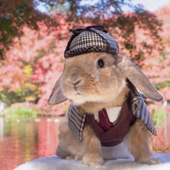 O coelhinho japonês PuiPui vestido igual ao Sherlock Holmes!