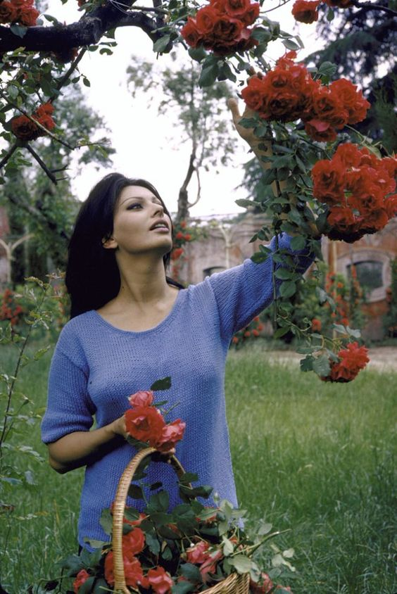 Sophia Loren: Film Legend-appeared on LIFE's cover seven times through the 1950s and 1960s