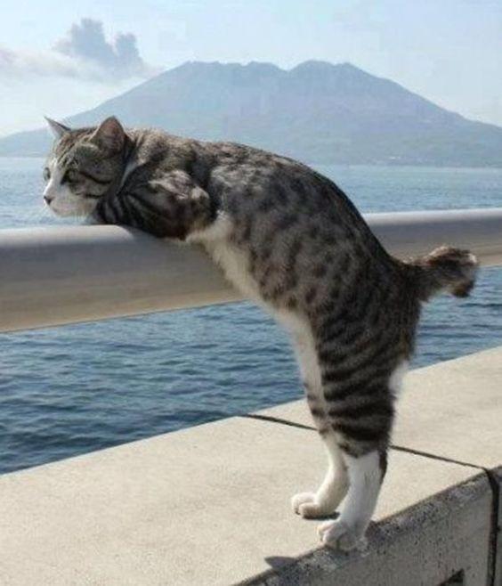 海を見つめる野良猫)