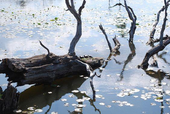 ... turtles baby turtles and more baby turtles ponds lotus turtles babies