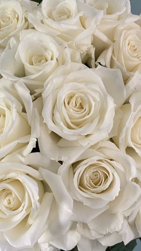 Wholesale Roses In 2020 Wholesale Roses Wholesale Flowers Wholesale Fresh Flowers
