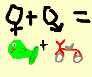 A woman needs a man like a fish needs a bike! - Google Search