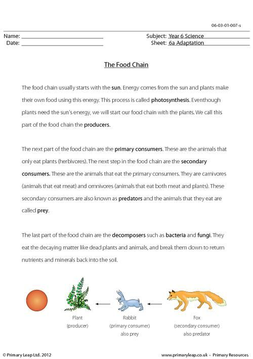 Primaryleap.co.uk - Science worksheet - The food chain.