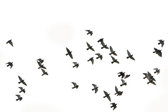 birds flying - Google Search