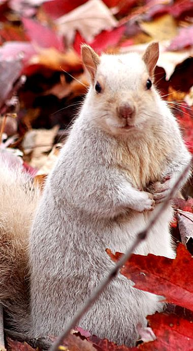 Beautiful White Squirrel ❊: