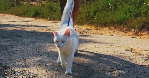 Pin By Buzz On Www Elecpeace Com In 2020 Cat Leash Cats Outside Indoor Cat