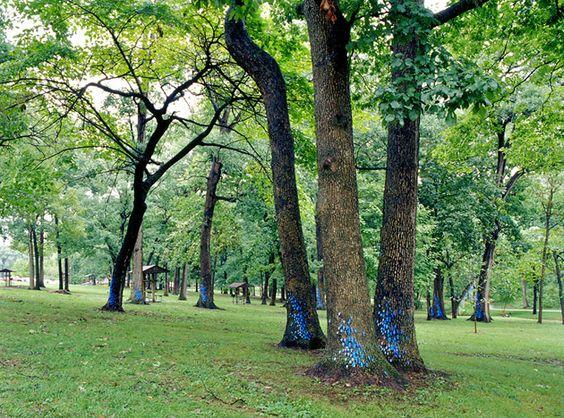 Michael McGillis outdoor art installation - ceramic on trees, Jefferson City Memorial Park, Missouri - they look like little butterflies!
