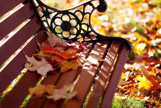 Resultado de imagen de plantas de otoño en pinterest