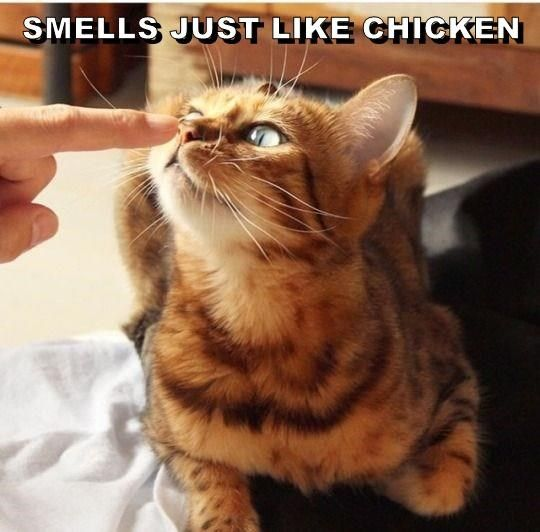 Smells Just Like Chicken Pretty Cats Cute Animals Beautiful Cats
