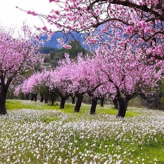 Hacerzumrut In 2020 Beautiful Landscapes Spring Landscape Summer Flowers Garden