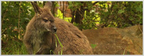 Wallaby at the Nashville Zoo! #onlyinnashville