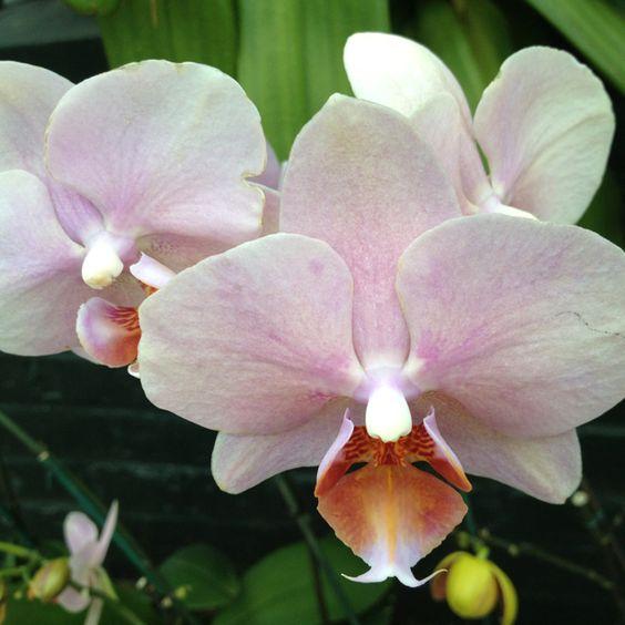 @ New York Botanical Garden