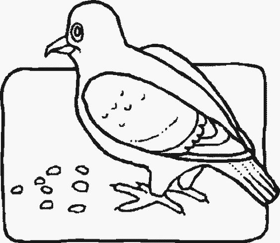 pigeon eating and more coloring fun pigeon coloring pages birds