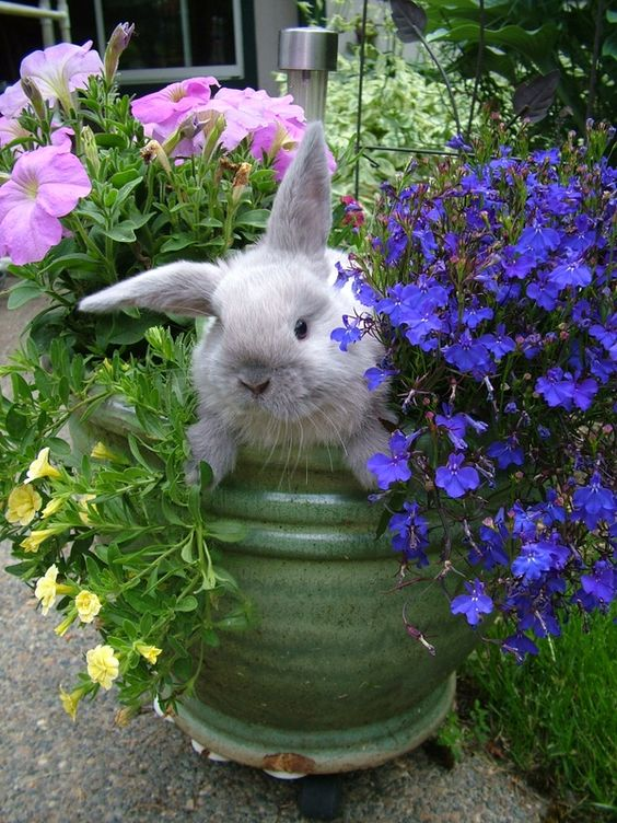 Flower Pots The Flowers And Bunnies On Pinterest