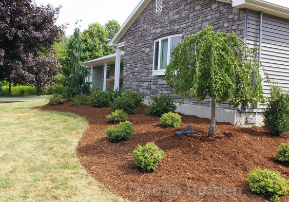 Freshly mulched bed with shrubs.