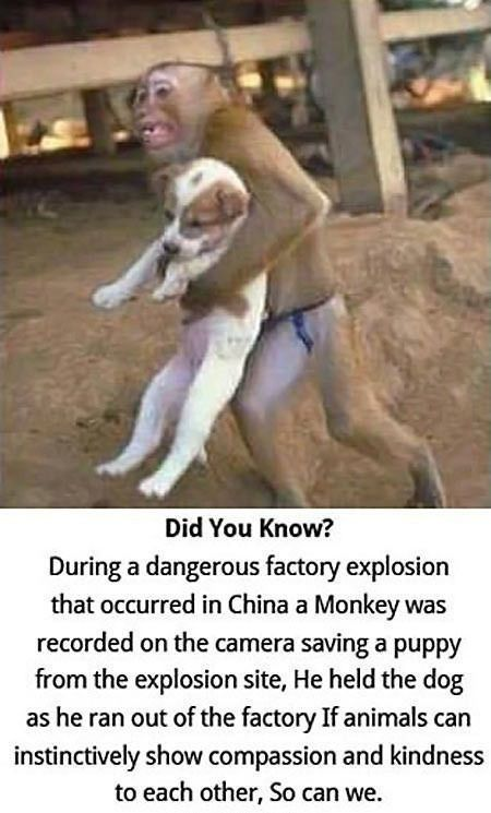 Animals are soo much than better humans!: