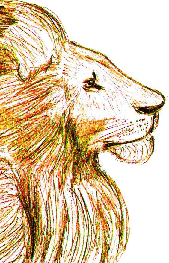 Lion, Pencil and Photoshop