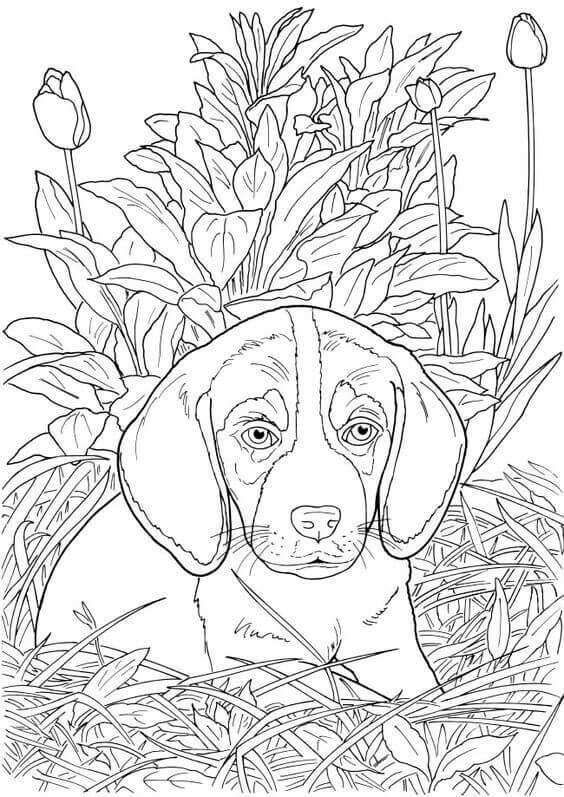 Realistic Dog Coloring Page In 2020 Dog Coloring Book Dog Coloring Page Puppy Coloring Pages