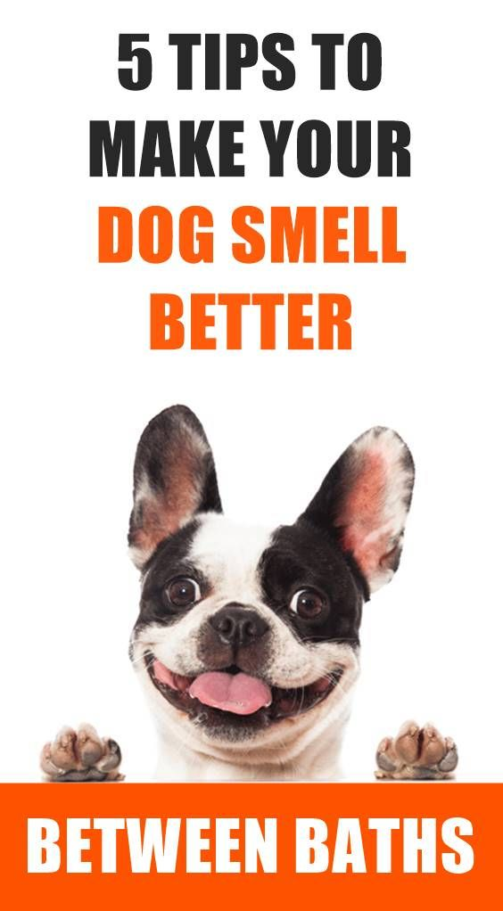 Is Dog Smell Stinking Up Your House And You Want To Remove It It S Hard To Get The Smell Of Dog From Your House And Cloth Dog Smells Dogs Stinky Dog