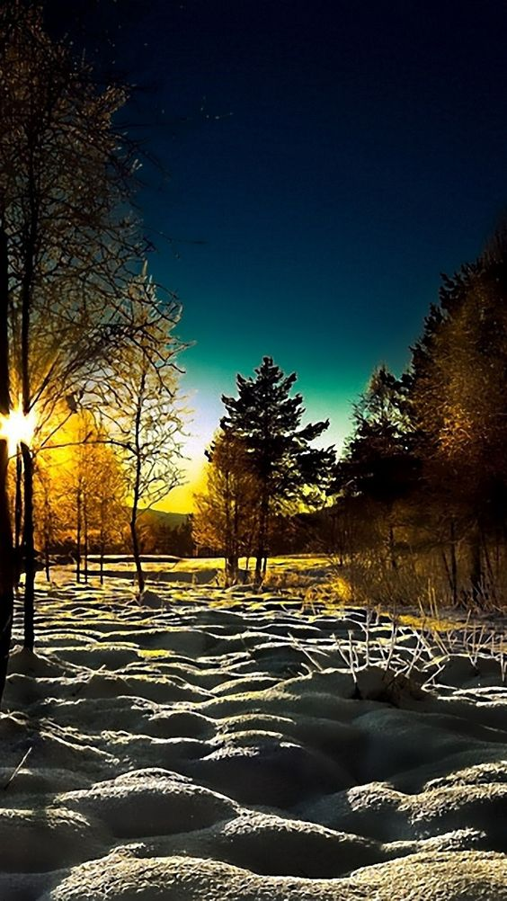 winter, wood, young growth, dawn, morning, shadows, cover, snowdrifts
