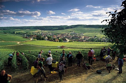 Harvest time in Alsace. You want to join? Just contact us!