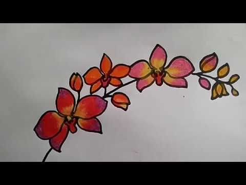 Keren 30 Gambar Bunga Anggrek Pensil Cara Menggambar Bunga Anggrek Youtube Download Tumbuhan Langka Di Indonesia Download Gambar Bunga Taman Bunga Bunga