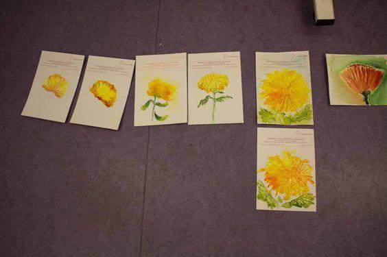 Malkurs – Chrysanthemen Aquarelle   Welches Aquarellpapier eignet sich für die Chrysanthemen Aquarelle (c) Frank Koebsch (2)