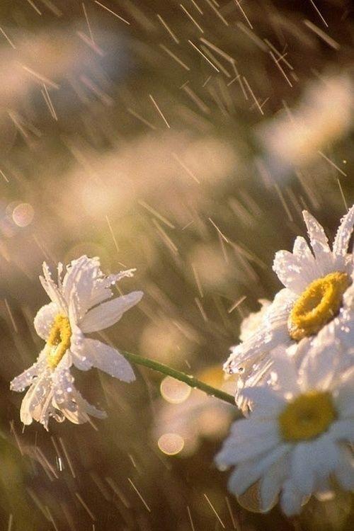 spring rain:
