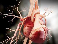 Kutatók közvetlen kapcsolatot mutattak ki a testmagasság és a szívbetegség kialakulásának kockázata között.