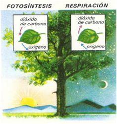 Materiales Orientación Educativa: La fotosíntesis contada en un cuento.