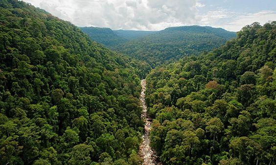 Màu xanh của địa ngàn ở Malaysia
