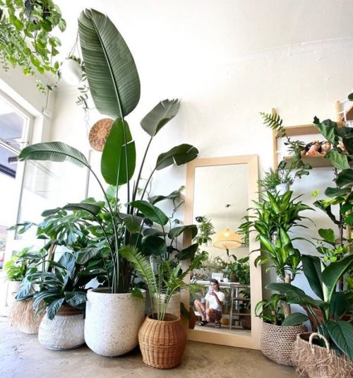 Bird Of Paradise Complete Care Guide That Planty Life In 2020 Plant Decor Indoor Room With Plants Living Room Green