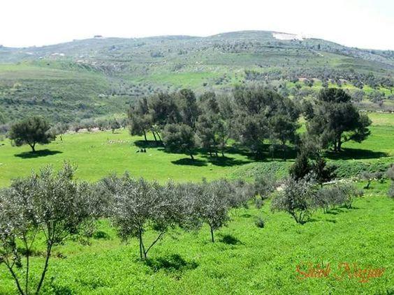 palestine /nablus