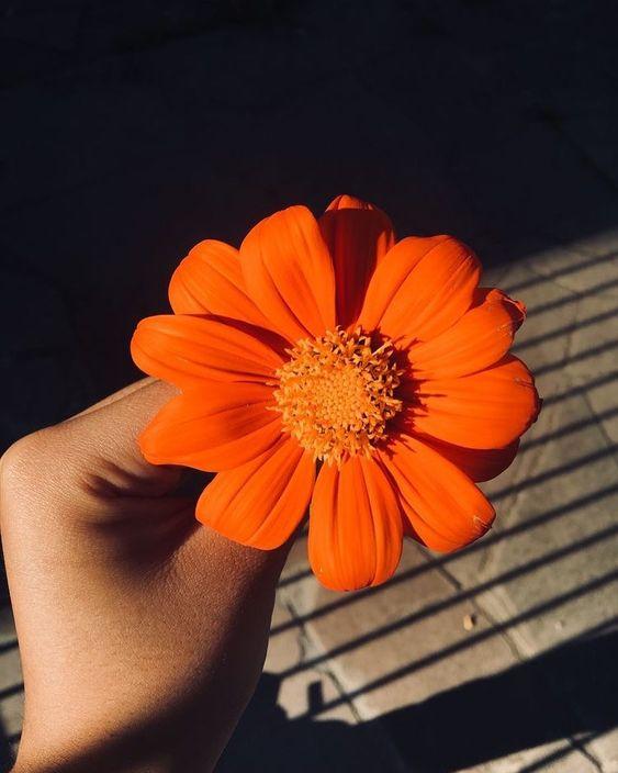 Pra florescer é preciso regar. Vale pra flores amigos e amores!  #frases #boanoite #quotes #frasesinspiradoras #love #flowers #verao