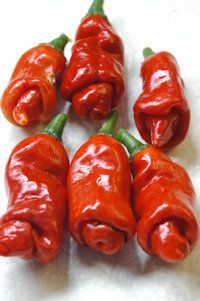 The Vegetable Seed Store Peppers Hot & Sweet