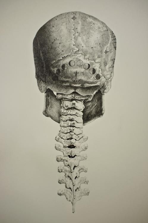 The constellations and the moon cycles on illustration of skull and spinal column