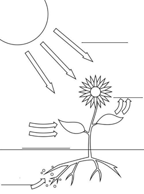Fotosíntesis Para Niños Explicación Gráfica Y Didáctica La Fotosintesis Para Niños Actividades De Fotosíntesis Experimentos Para Primaria