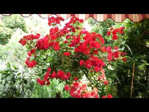 Mein Mediterraner Garten Youtube In 2020 Mediterraner Garten