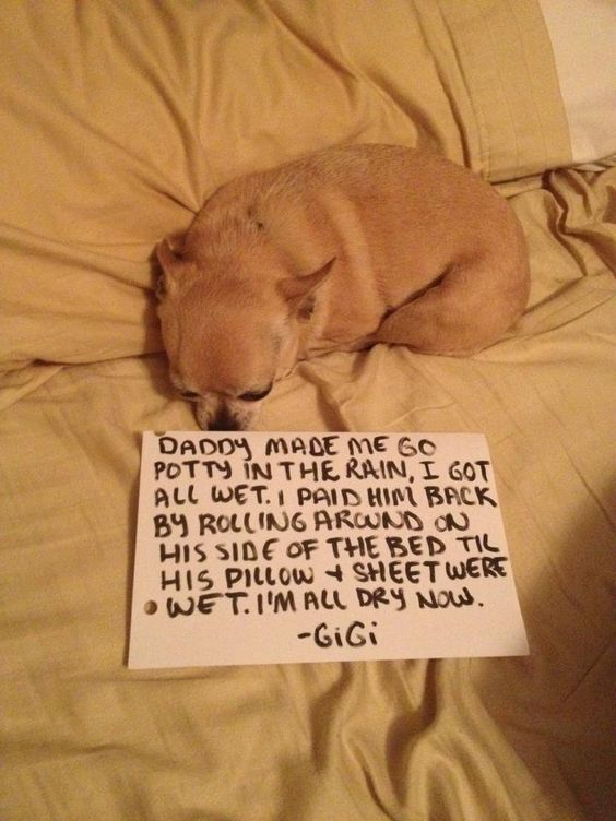 Dog Rolling On Bed